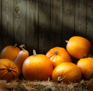 Art autumn Pumpkin thanksgiving backgrounds