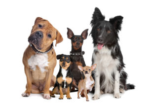 How Will Your Pet Affect Your Home Insurance?