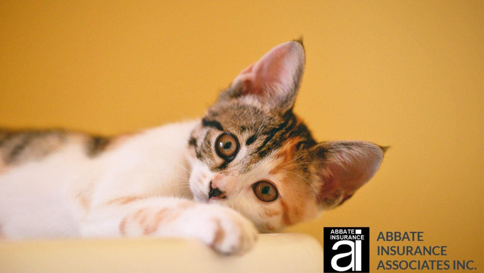 Pet Insurance by Abbate