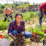 Vegetables Garden by Abbate Insurance