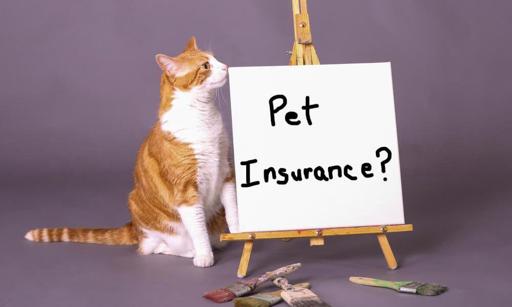 Understanding How Pet Insurance Work